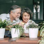 Casal de idosos tratam das suas plantas de interior