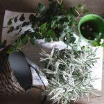 Transplante de plantas em vasos com terra e ferramentas