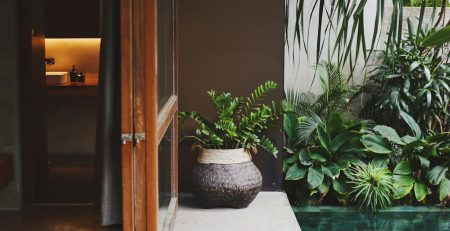Pateo com plantas - urban jungle