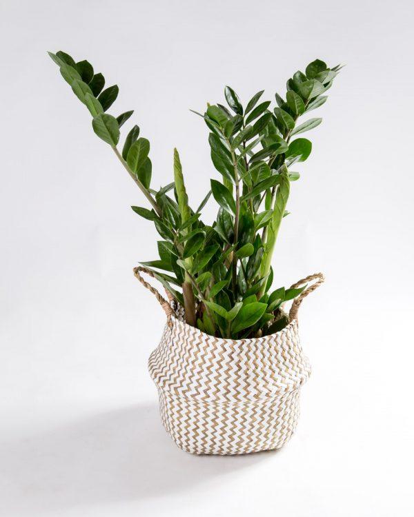 Cesto para plantas branco natural