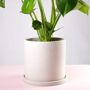 Vaso decorativo para plantas com costela de adão