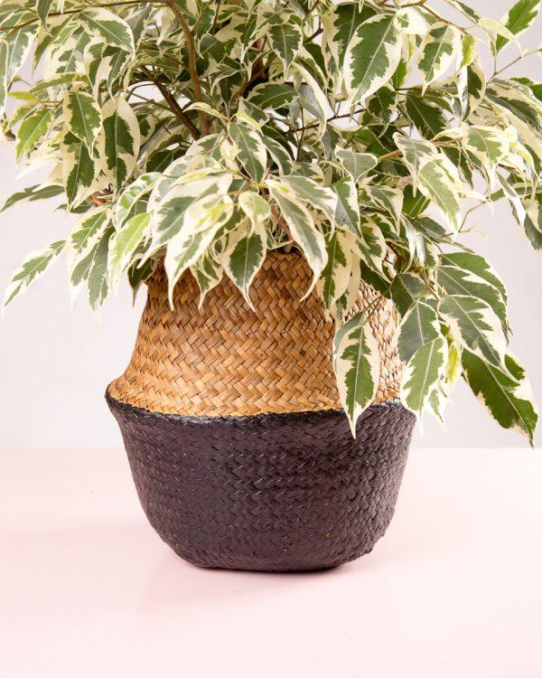 Cesto decorativo natural para plantas preto