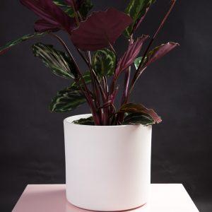 Vaso decorativo para plantas Maceo sand XL branco calathea