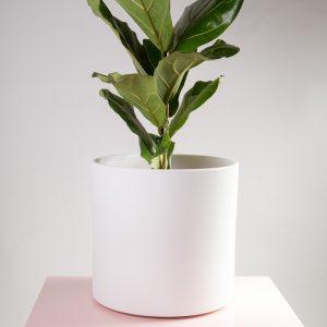 Vaso decorativo para plantas Maceo sand XXL branco ficus lirata