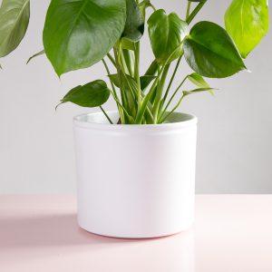 Vaso decorativo para plantas Lucca branco costela-de-adão
