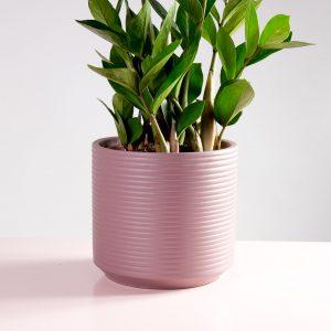 Vaso decorativo de cimento rosa velho zamioculcas zamiifolia