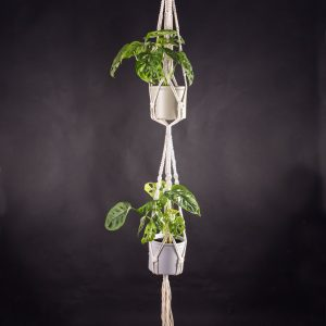 Macramé duplo para vasos suspensos com planta monstera adansonii