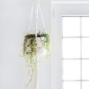 Macramé para vasos suspensos com planta senecio