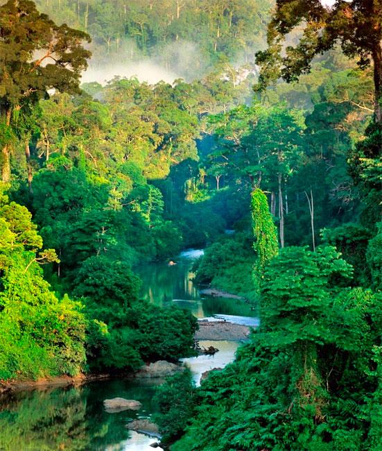 Floresta tropical no Borneu