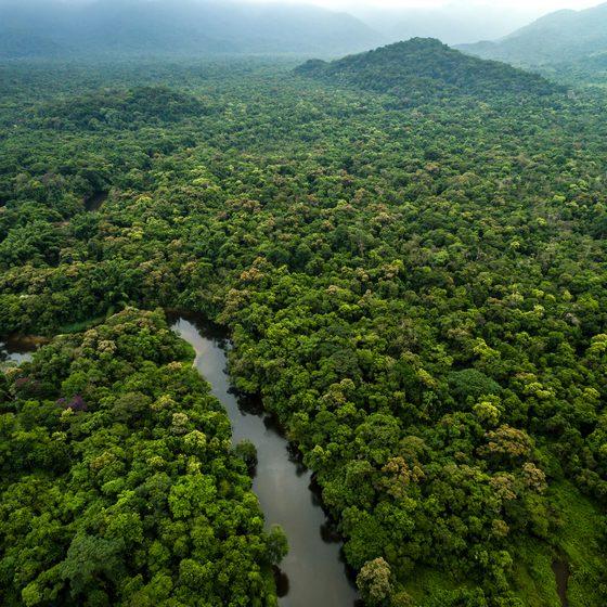 Floresta Amazónica Brasil