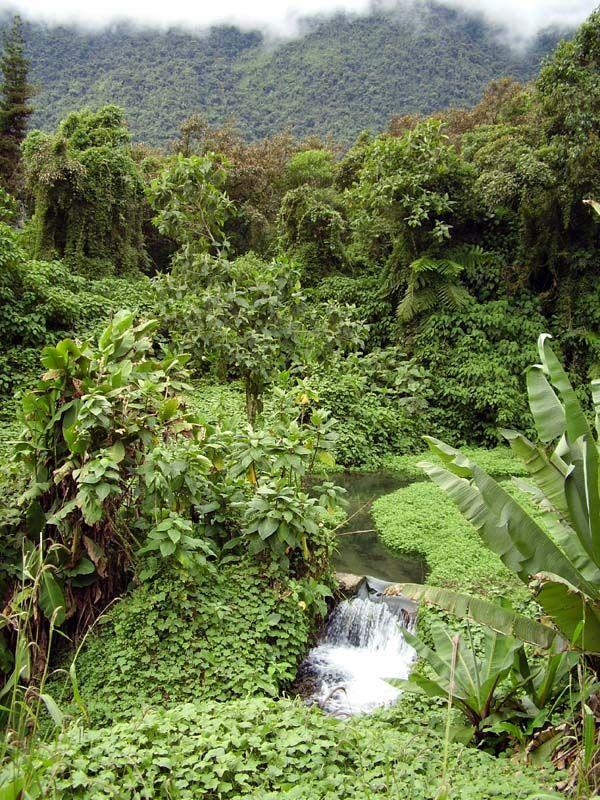 Floresta tropical na Bolívia