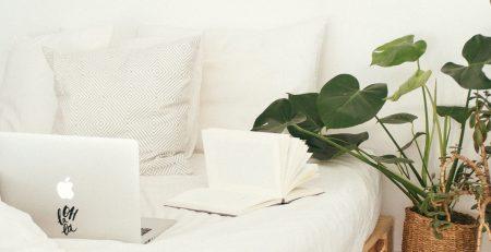 Plantas para quartos- costela de adão