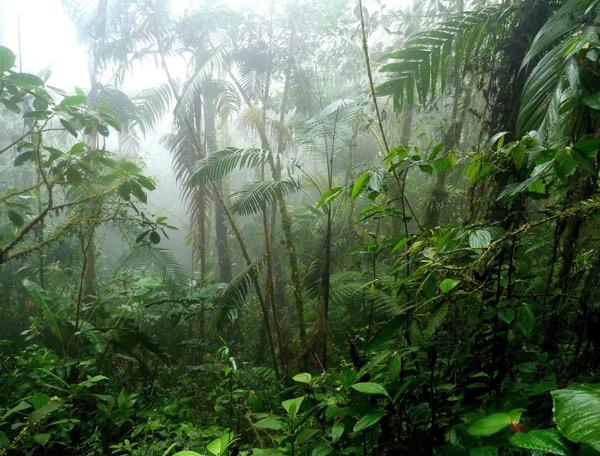 selva américa central