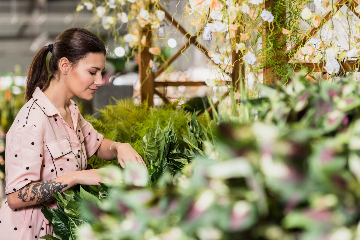 Comprar plantas de interior