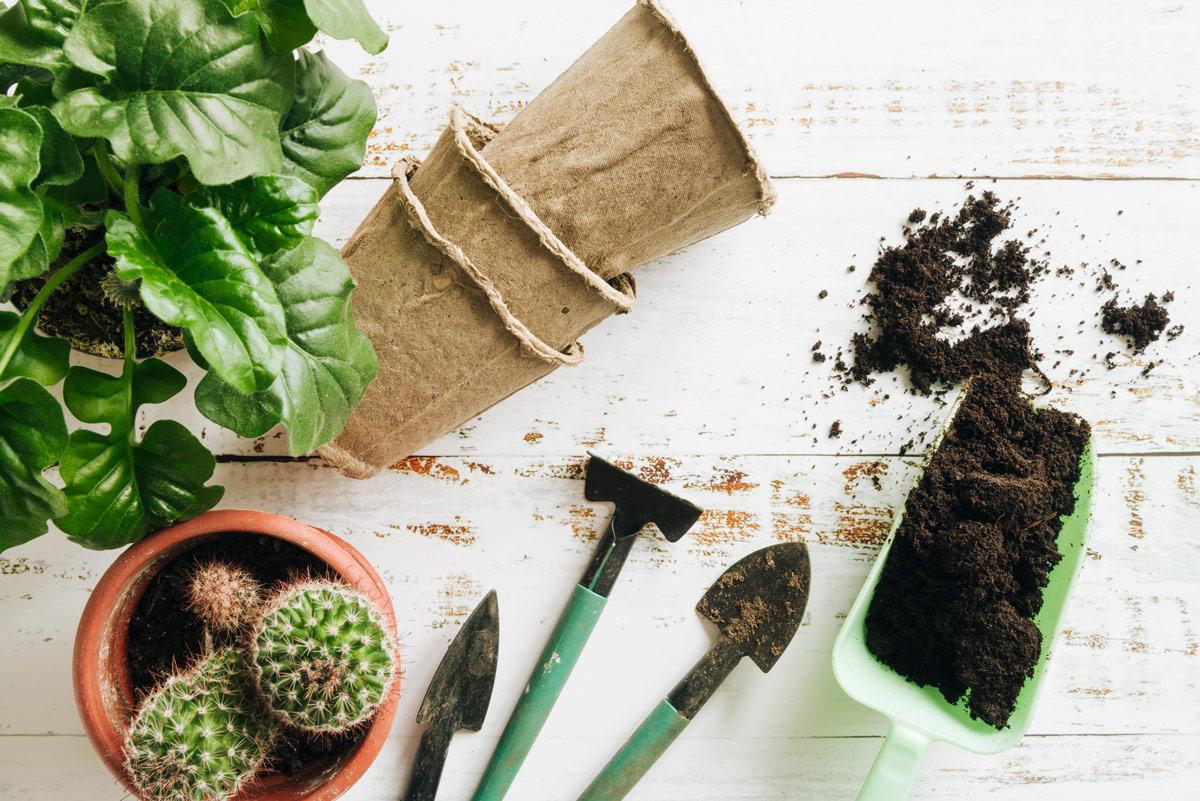 propagação de plantas de interior