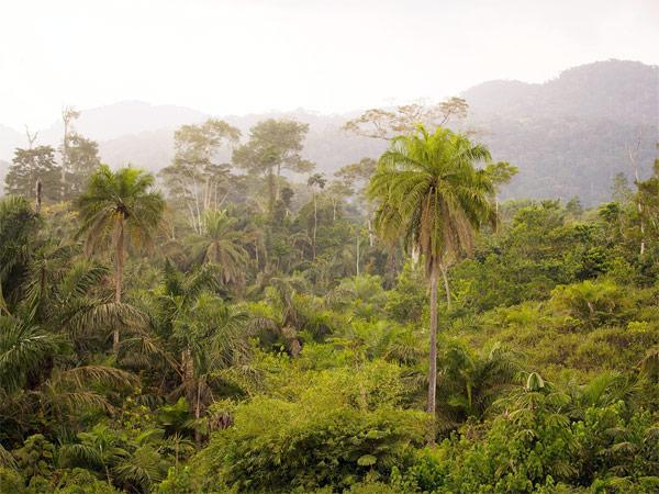 floresta tropical Gabão