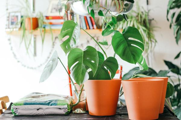 reenvasar plantas