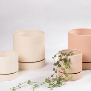 Ceropegia woodii - string of hearts com vasos