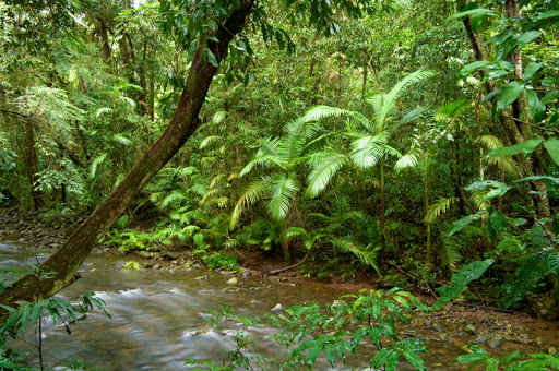 floresta húmida sudeste asiático