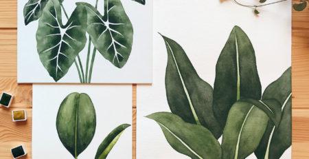 Ilustrações botanicas isabela quintes