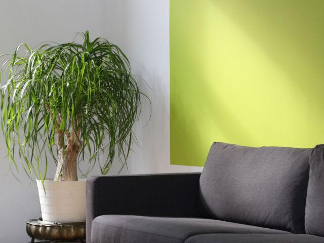 Plantas Feng Shui interiores
