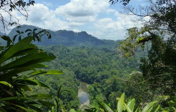 Floresta tropical Ilha de Bornéu