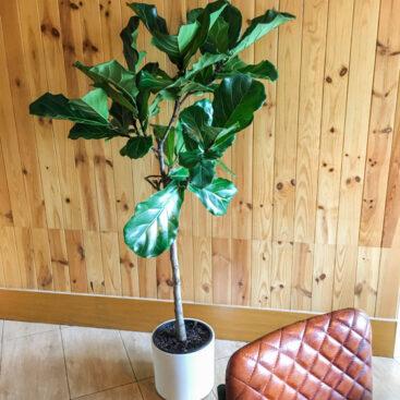 projecto plantas de interior restaurante lisboa