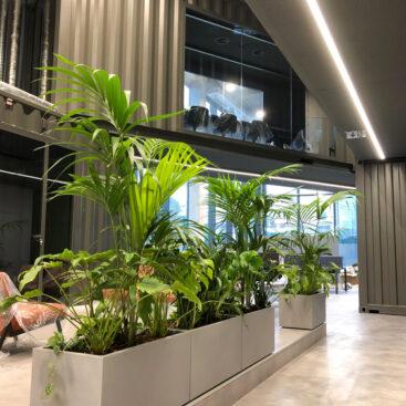 Plantas e vasos Paisagismo de interiores Petroassist-4